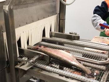 машина для мойки рыбы и удаления слизи