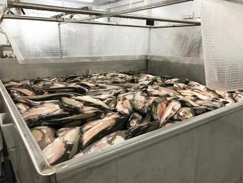 Накопительный бункер для хранения рыбы